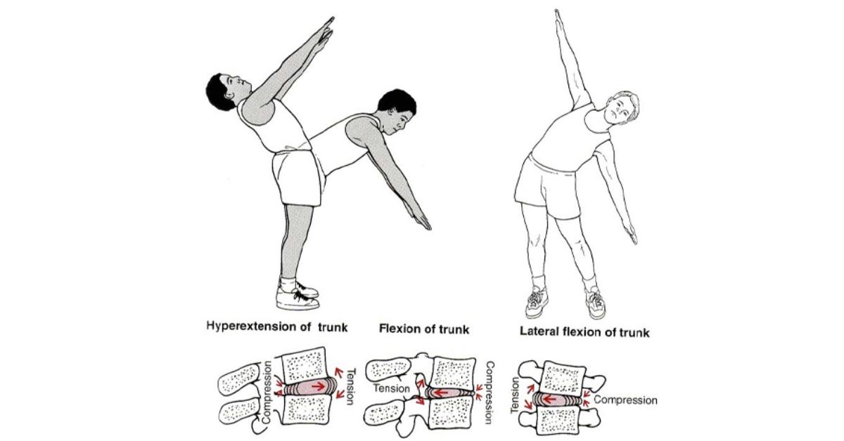 Kręgosłup i jego amortyzacja | biomechanika krążka międzykręgowego